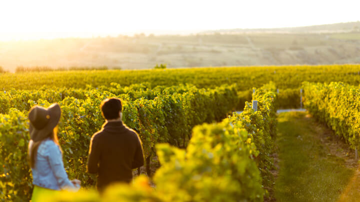 Farmer Singles holding hands at sunset in a winery filed